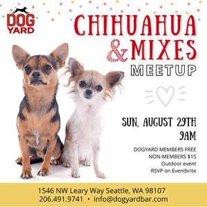 Seattle Chihuahua meetup in Ballard