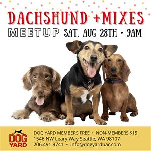 dachshund meetup in Ballard