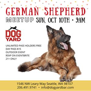 Seattle German Shepherd meetup in Ballard