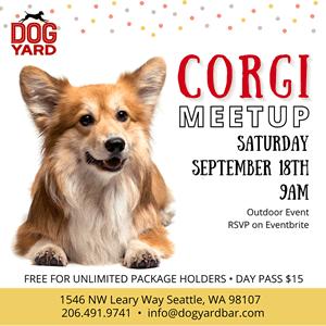 Corgi meetup in Ballard
