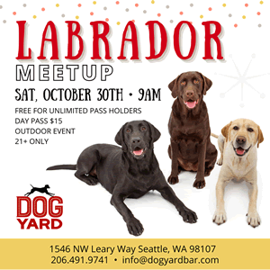 Seattle Labrador meetup in Ballard
