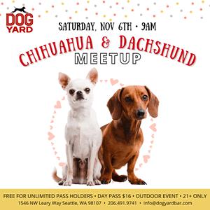 Seattle Chihuahua & Dachshund meetup in Ballard