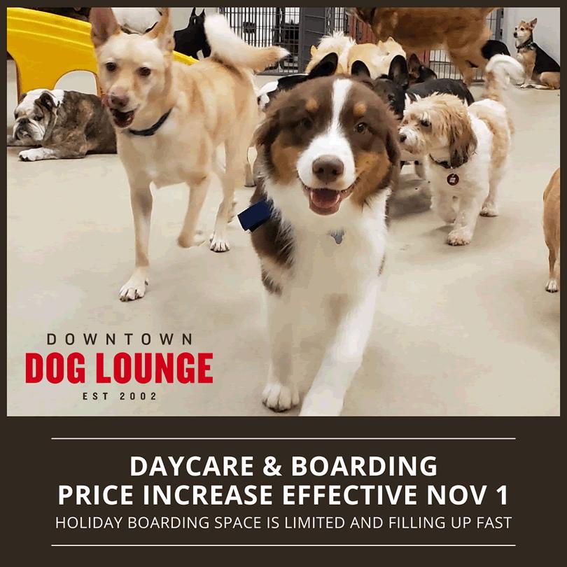 Seattle Dog Daycare & Boarding